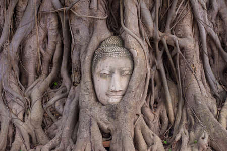 Buddha stone head  statue in tree  of  Temple Ayutthaya in Thailand Stock Photo