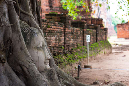 head side of buddha statue in tree roots at Ayutthaya