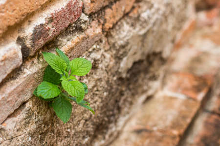 little tree on red bricks wall background Stock Photo