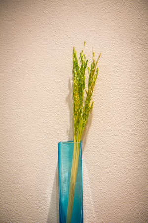 Rice plants in a vase