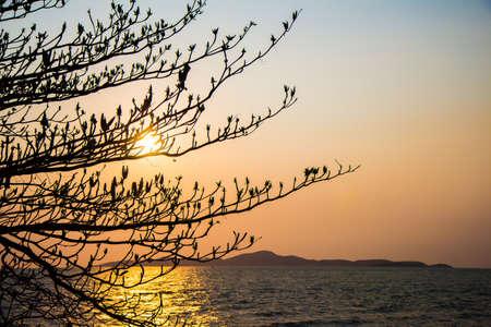 tree and twilight sea