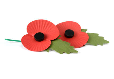 Two remembrance poppies against a white background with copy space. photo