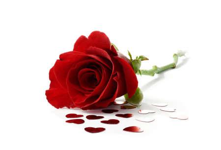 Studio Makro Von Blut Rot Valentinstag Stieg Gegen Einen Weißen Hintergrund  Mit Herzförmigen Konfetti Besprüht