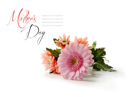mothering: Studio macro of mothers day flowers with soft shadows against a white background. Copy space.