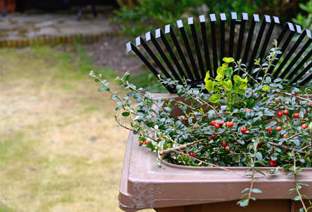 Stock image of garden clippings in recycling container with lawn rake in the background  Copy space