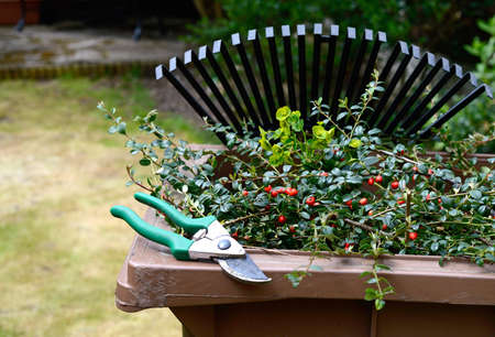 Stock image of garden clippings and secateurs with recycling container and lawn rake in the background Copy space