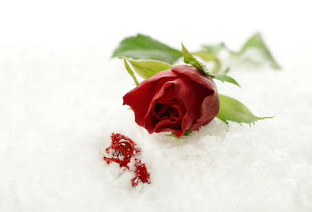 A studio created concept depicting a broken heart. A red rose lying in the snow with spilled blood. Copy space. photo