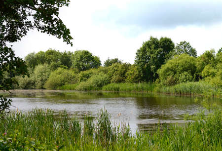 midlands: View of one of the many serene waterways at Attenborough Nature Reserve, Nottinghamshire, on a  summers day. Copy space.