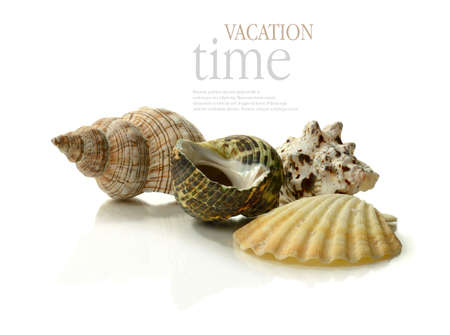 A vacation and holiday concept image  A selection of exotic seashells grouped together against a white background with soft reflections  Copy space