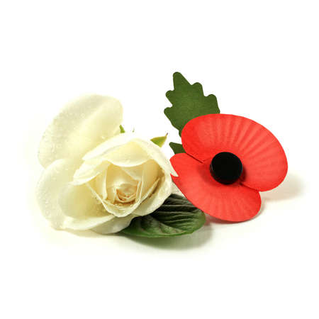 remembrance day poppy: Concept image for Remembrance Sunday. A white rose for peace and an artificial red poppy worn to symbolize the fallen from past World Wars and other military conflicts around the world. Copy space. Stock Photo