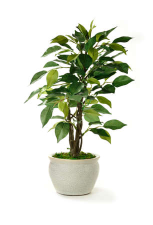 Studio image of a miniature artificial tree in a pot  Concept image for interior design or office furniture use against a white background  Copy space  photo