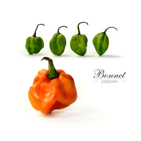 habanero: Creative image of assorted Scotch Bonnet Peppers with soft shadows against a white background. Copy space.