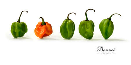 Creative panorama image of assorted Scotch Bonnet Peppers with soft shadows against a white background. Copy space.