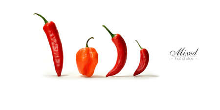 habanero: Creative panorama image of assorted mixed hot Chillies with soft shadows against a white background. Copy space.