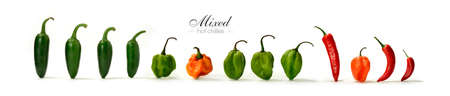 Creative panorama image of assorted mixed hot Chillies with soft shadows against a white background. Copy space.