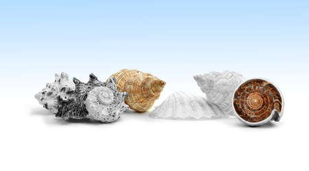 Assorted sea shells against a graduated blue and white background