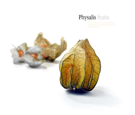 husk tomato: Studio image of Physalis fruits against a white background  Copy space