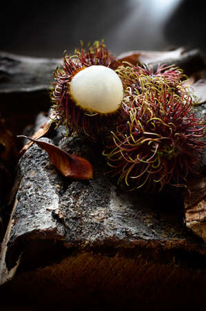 creatively: Creatively lit image of tropical rambutan fruits, also known as hairy lychees in a woodland setting. Looks weird, taste great. Concept image for tropical fruit. Copy space.
