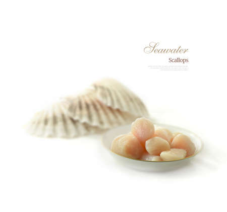 thawing: Thawing frozen seawater scallops with scallop shells in the background against white. Copy space.