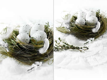 cosiness: Dual image of white speckled eggs in a grass birds nest against a white background. Concept image for Spring or Easter. Copy space.