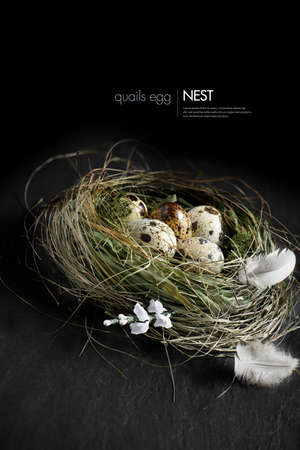 nest egg: Curated concept image for Easter, pension funding, or investments. Genuine quail eggs in a authentic grass birds nest against a dark background. Copy space.