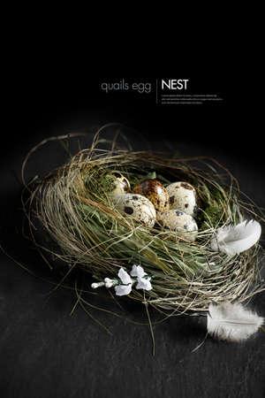 nido de pajaros: Imagen del concepto Comisariada por Pascua, planes de pensiones, o inversiones. Huevos de codorniz genuinos en un auténtico nido de pájaros hierba contra un fondo oscuro. Copiar el espacio.