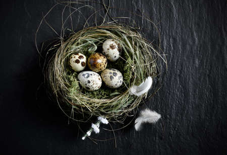 quail nest: Curated concept image for Easter, pension funding, or investments. Genuine quail eggs in a authentic grass birds nest against a dark background. Copy space.