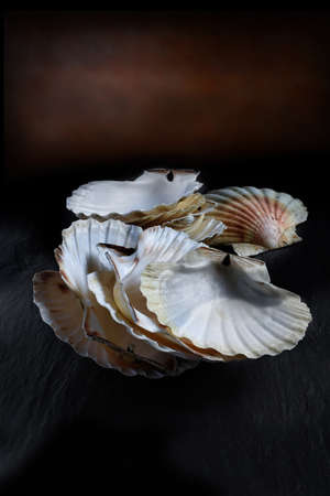 lit image: Creatively lit stacked, empty scallop shells against a rustic background. The perfect image for a fish restaurant menu cover design. Copy space.