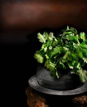 selectively: Creatively lit and selectively focused image of a fresh cilantro or coriander plant against a dark, rustic backkground. Concept image for Indian cooking. Copy space.