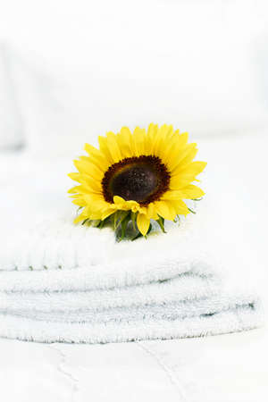 accommodation space: A fresh concept image for welcome. Sunflower place on top of a folded white towel on a white bed duvet in a hotel room. Accommodation for copy space.