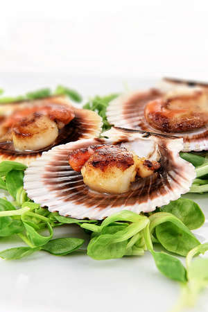 Delicious, perfectly grilled king scallops with attached orange coral roes with a  pea green shoots salad garnish with accommodation for copy space. Stock Photo