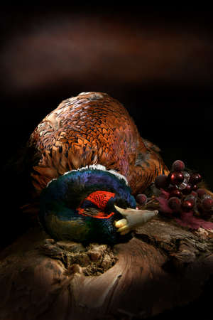 A male, cock pheasant ready for plucking and prep for cooking, shot against a dark rustic background. Concept image for Christmas, Thanksgiving, hunting, country lifestyle. Copy space. Stockfoto