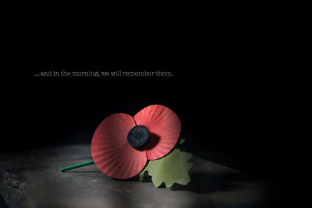 Creatively lit concept image for World War remembrance day where the red poppy is worn by millions around the world on their lapels as a symbol of remembrance to those fallen in war. Copy space.