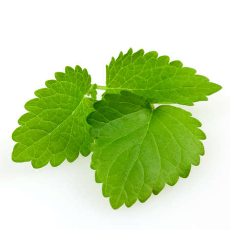 lemon balm: lemon balm isolated on white