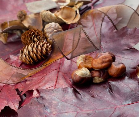 conker: leaf, conker and fir cone  Stock Photo
