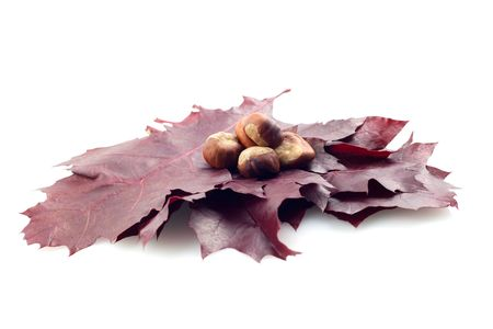 conker: leaf with conker on white background