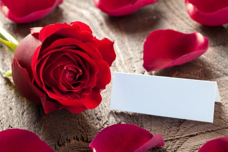 a rose with petals and tag Stock Photo - 8325417