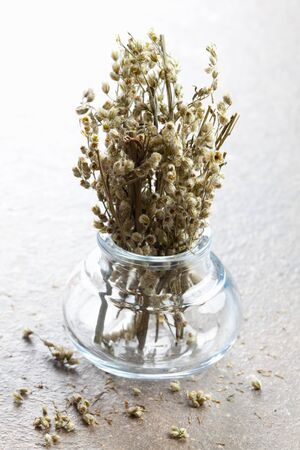 fresh mugwort in a glass  photo