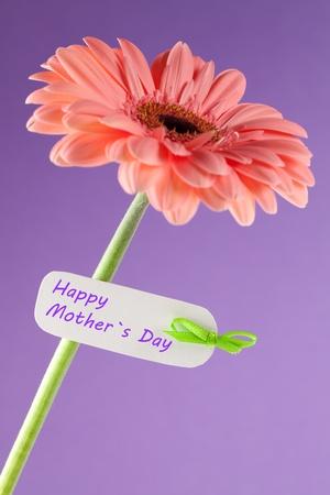 Gerbera con etiqueta y texto para el día de las madres