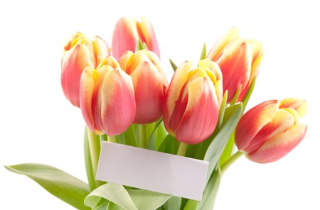 tulips with label isolated on white  photo