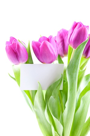 purple tulips with label isolated on white background Stock Photo - 8835405