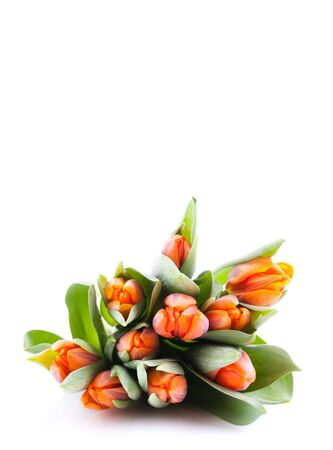 tulips isolated on white with copy space  Stock Photo - 8835374