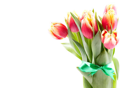 a bunch of tulips with ribbon isolated on white background Stock Photo - 8835388