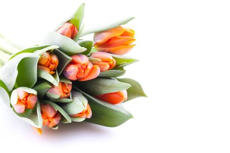 tulips bouquet with copy space isolated on white background  Stock Photo - 8835387