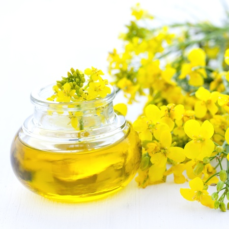 canola plant: fresh rapeseed oil in a bottle