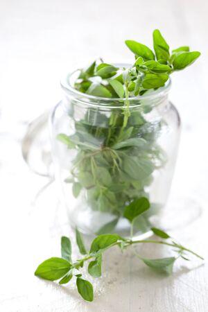 marjoram: fresh green marjoram in a jar