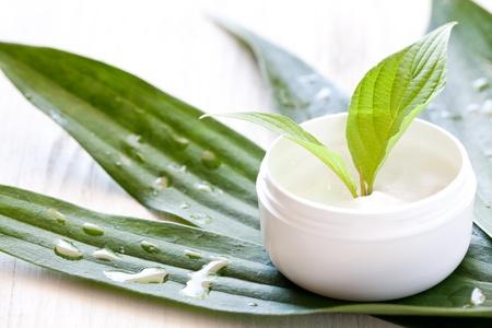 화장품: 녹색 잎 항아리에 크림을 얼굴