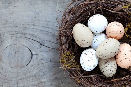 nest egg: small nest with eggs on wood