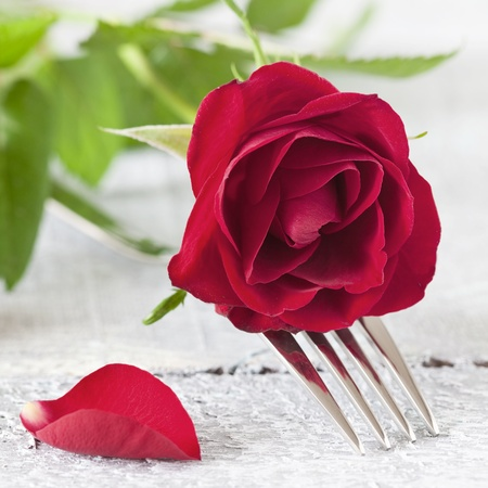 fork with red rose  photo