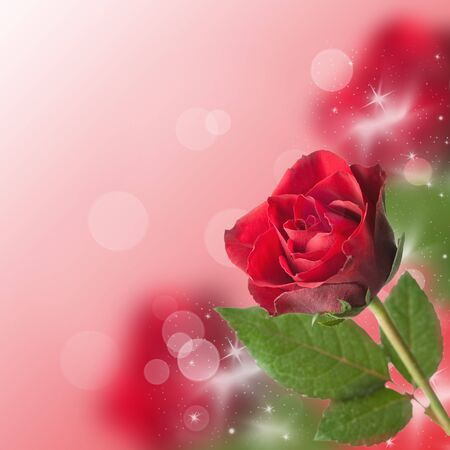 red rose bokeh: red rose border with bokeh and copy space Stock Photo